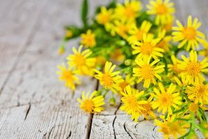 Wild Yellow Flowers Closeup on Rustic Wooden Background by Marylooo