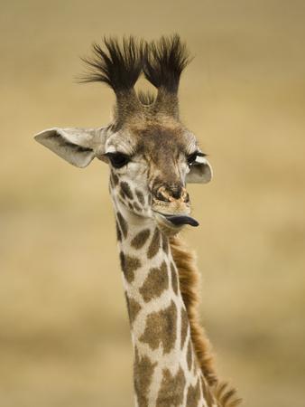https://imgc.allpostersimages.com/img/posters/masai-giraffe-masai-mara-game-reserve-kenya_u-L-PHAJ430.jpg?artPerspective=n