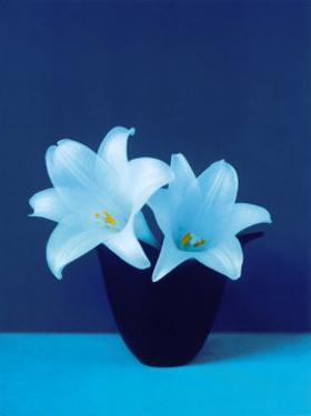 Lilies by Masao Ota