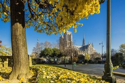 View of the Cathedrale (Cathedral) De Notre Dame from Place (Square) Rene Viviani in Autumn