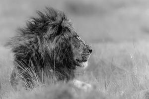 The King Is Alone by Massimo Mei
