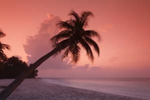 Palm on Filitheyo Island at Sunset by Massimo Pizzotti