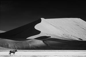 The Solitary by Mathilde Guillemot