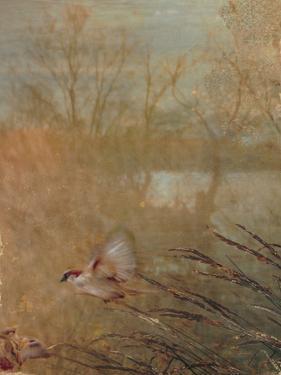 Golden Summer Wings by Matina Theodosiou