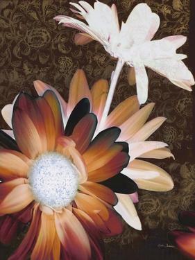 Velvet Daisy 2 by Matina Theodosiou