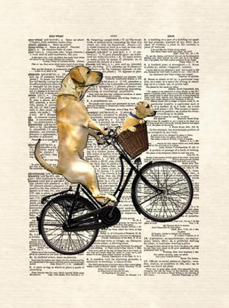 Labrador Bike by Matt Dinniman