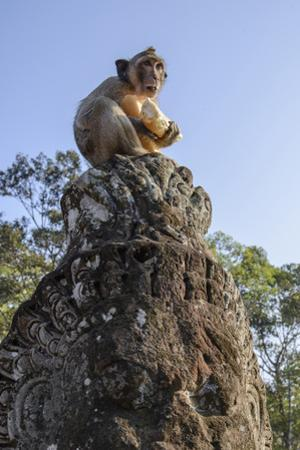 Cambodia, Angkor Wat. Long Tailed Macaque on Statue