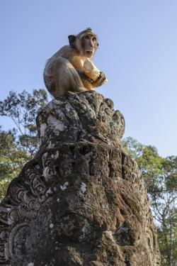 Cambodia, Angkor Wat. Long Tailed Macaque on Statue by Matt Freedman