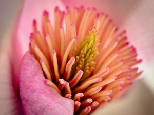 Extreme Close-Up of Flower by Matt Freedman