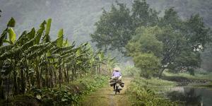 Vietnam, Ninh Binh. Woman on Bicycle Riding Away on Path by Matt Freedman