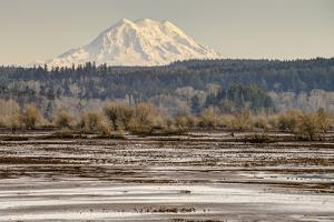 Washington. Mt Rainier in the Distance at the Nisqually by Matt Freedman