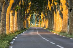 France, Provence, Vaucluse. Typical Tree Lined Road at Sunset by Matteo Colombo