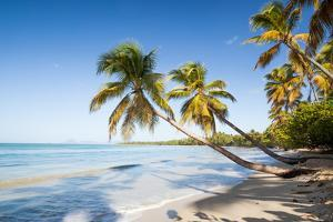 Les Salines Beach with Palm Trees in Martinique by Matteo Colombo