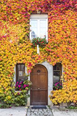 Typical House Covered with Vines, Hautvilliers, Marne Valley, Champagne Ardenne, France by Matteo Colombo