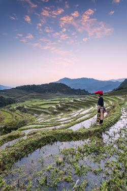 Vietnam, Sapa. Red Dao Woman on Rice Paddies at Sunrise (Mr) by Matteo Colombo
