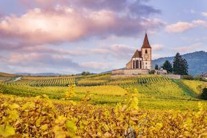 Vineyards, Hunawihr, Alsace, France by Matteo Colombo