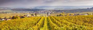 Vineyards of Ville Dommange, Champagne Ardenne, France by Matteo Colombo