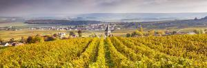 Vineyards of Ville Dommange, Champagne Ardenne, France by Matteo Colombo