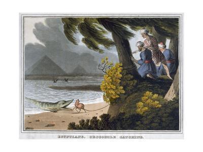 'Egyptians, Crocodile Catching', 1813