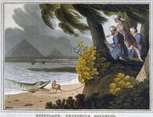 'Egyptians, Crocodile Catching', 1813 by Matthew Dubourg