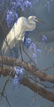 Egret in Wisteria by Matthew Hillier