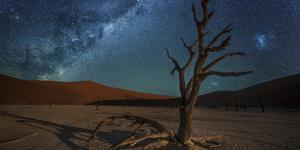 The Milky Way Above a Lone Camel Thorn Acacia Tree in the Barren Desert by Matthew Hood