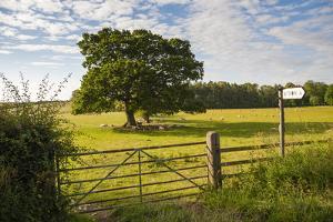 Northumberland National Park, Near Haydon, Northumberland, England, United Kingdom, Europe by Matthew