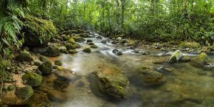 Burio River (Rio Burio), La Fortuna, Arenal, Alajuela Province, Costa Rica, Central America by Matthew Williams-Ellis