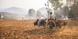 Farming Between Inle Lake and Kalaw, Shan State, Myanmar (Burma), Asia by Matthew Williams-Ellis