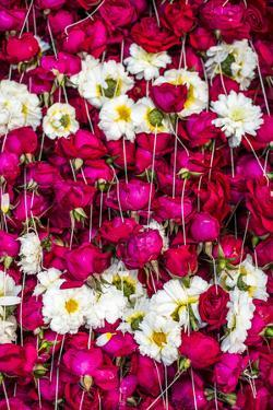 Flowers for offering at a Hindu temple, New Delhi, India, Asia by Matthew Williams-Ellis