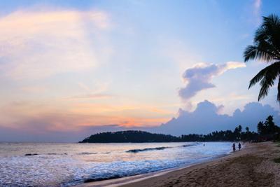 Mirissa Beach, Palm Tree at Sunset on the Indian Ocean, South Coast by Matthew Williams-Ellis