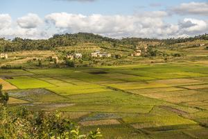 Paddy Rice Field Landscape in the Madagascar Central Highlands Near Ambohimahasoa by Matthew Williams-Ellis