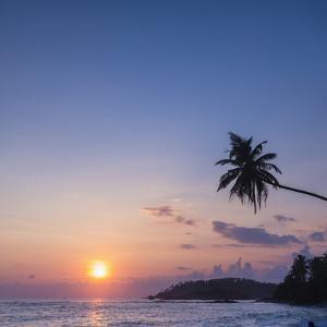Palm Tree at Sunset on Tropical Mirissa Beach by Matthew Williams-Ellis