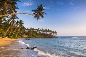 Palm Tree on Mirissa Beach, South Coast, Southern Province, Sri Lanka, Asia by Matthew Williams-Ellis
