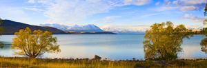 Panorama of Autumn Trees at Lake Tekapo, Canterbury, Southern Lakes, South Island, New Zealand by Matthew Williams-Ellis