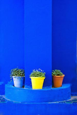 Potted Plants and Bright Blue Paintwork by Matthew Williams-Ellis