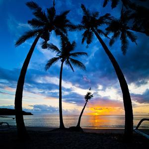 Silhouette of Palm Trees at Sunset, Nippah Beach, Lombok, Indonesia, Southeast Asia, Asia by Matthew Williams-Ellis