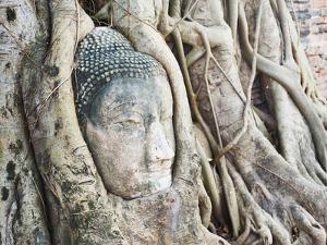 Stone Buddha Head in Fig Tree, Wat Mahathat, Ayutthaya City, UNESCO World Heritage Site, Thailand by Matthew Williams-Ellis