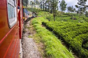 Train Journey Through Tea Plantations by Matthew Williams-Ellis