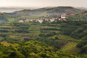 Vineyards and the Hill Top Town of Vedrijan, Goriska Brda, Slovenia, Europe by Matthew Williams-Ellis