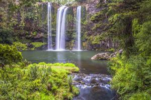 Whangarei Falls, a Popular Waterfall in the Northlands Region of North Island, New Zealand, Pacific by Matthew Williams-Ellis