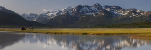 Brown Bears Forage Near a Waterway Reflecting the Aleutian Range by Matthias Breiter