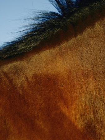 A Horses Neck and Mane by Mattias Klum