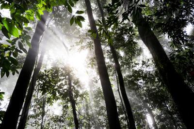 A Primary Rainforest in Morning Mist by Mattias Klum