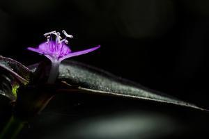 A Terrestrial Flower in Serra Da Tiririca State Park by Mattias Klum