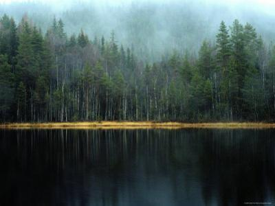 Arrow-Straight Evergreens Are Reflected in a River or Lake; the Rest is Lost in Mist by Mattias Klum