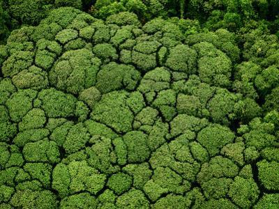 Borneo supports at least 15,000 known species of plants by Mattias Klum