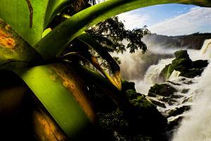 Bromeliad Leaves and Rainforest Waterfalls in Iguazu National Park by Mattias Klum