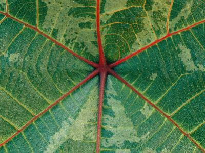 Close View of a Leaf by Mattias Klum