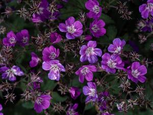 Close View of Purple Wildflowers by Mattias Klum